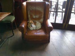 Bonnie WH Chair