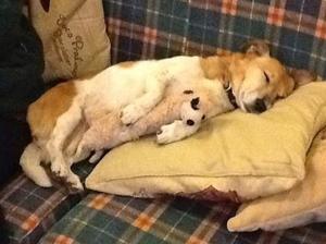 Bonnie_Sleeping